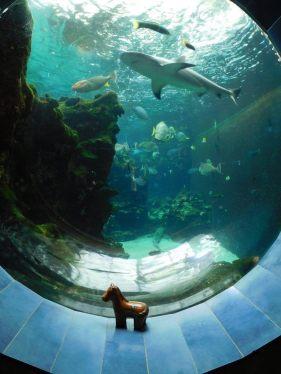 Aquarium, Noumea, New Calendonia